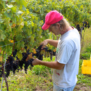 'Sean' helps with the harvest at FRW