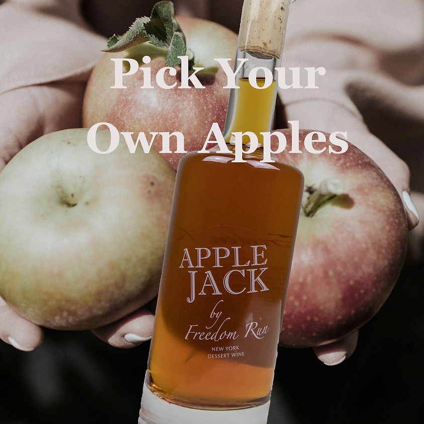 Pick Your Own Apples @ Freedom Run Winery