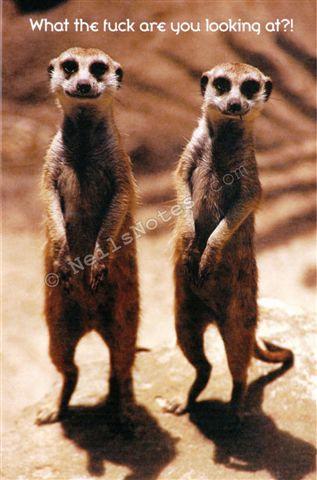 #383 - WTF - Meerkats