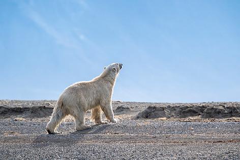Arctic_Landscapes-017.jpg