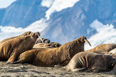 Arctic_Landscapes-012.jpg