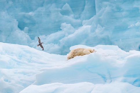 Arctic_Landscapes-049.jpg