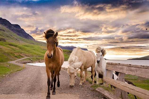 Arctic_Landscapes-025.jpg