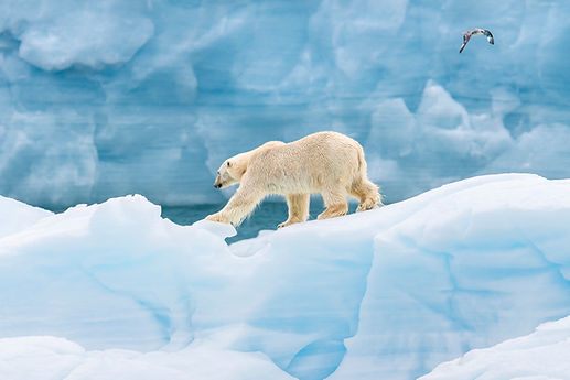 Arctic_Landscapes-048.jpg