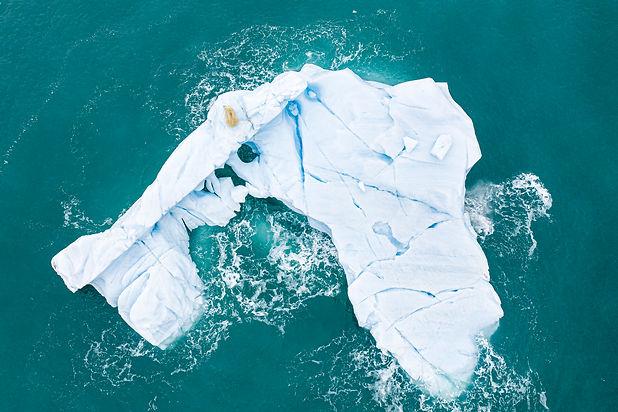 Polar Bear from above