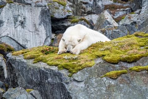 Arctic_Landscapes-021.jpg
