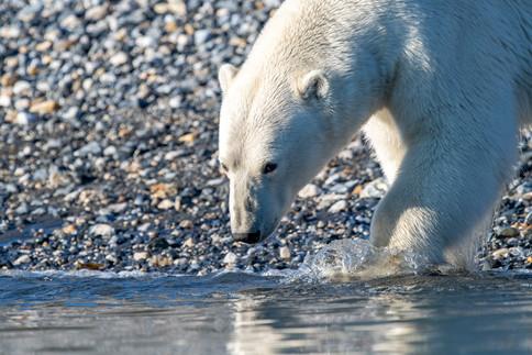 Arctic_Landscapes-059.jpg