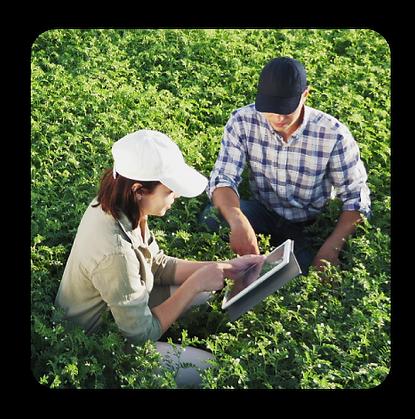 novoeste-online-agronegocios-imagem-topo