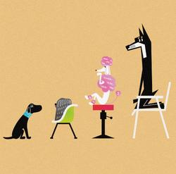 イヌ、色々な椅子に腰掛ける