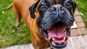 4 Ways To Reward Dogs Without Treats