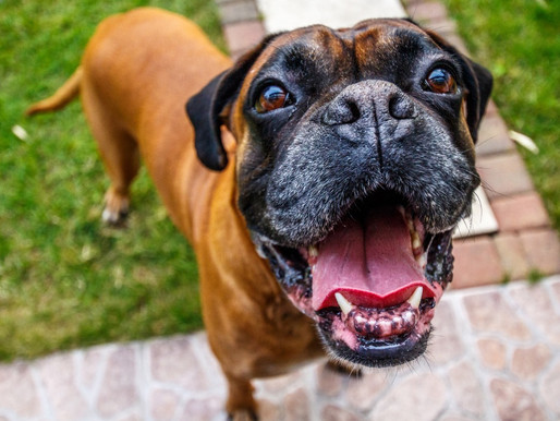 4 Ways To Reward Dogs Without Treats