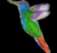 adeeshummingbird_edited.png