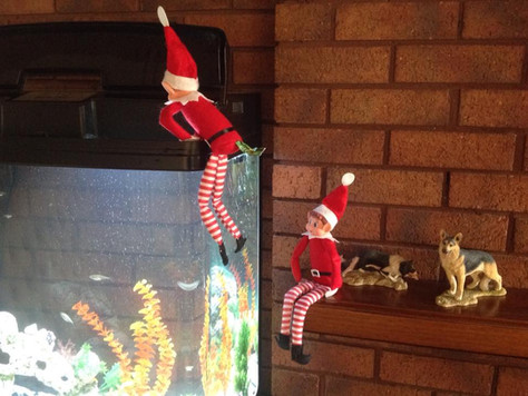 My Elf's Got Talent..some of your photos