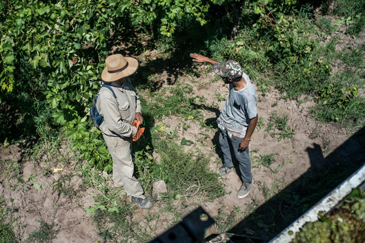 The crew chief talks to a harvester about the progress of the work on the day.
