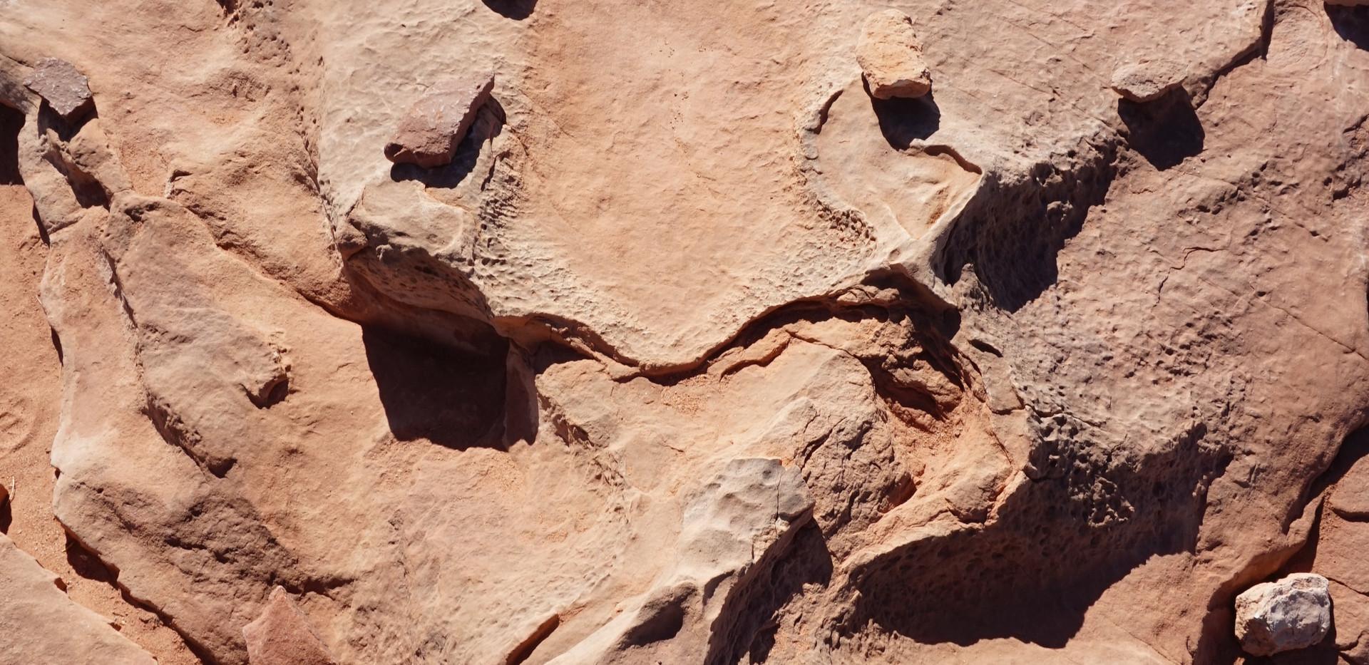 Tyranosaure.JPG