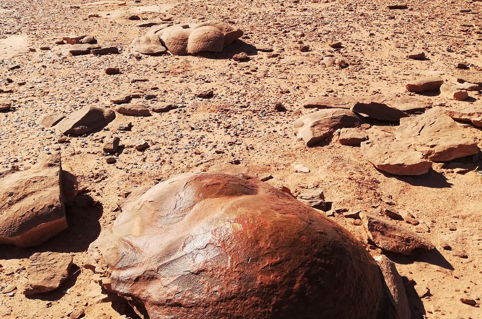 Excréments_dinosaures_fossilisés.jpg