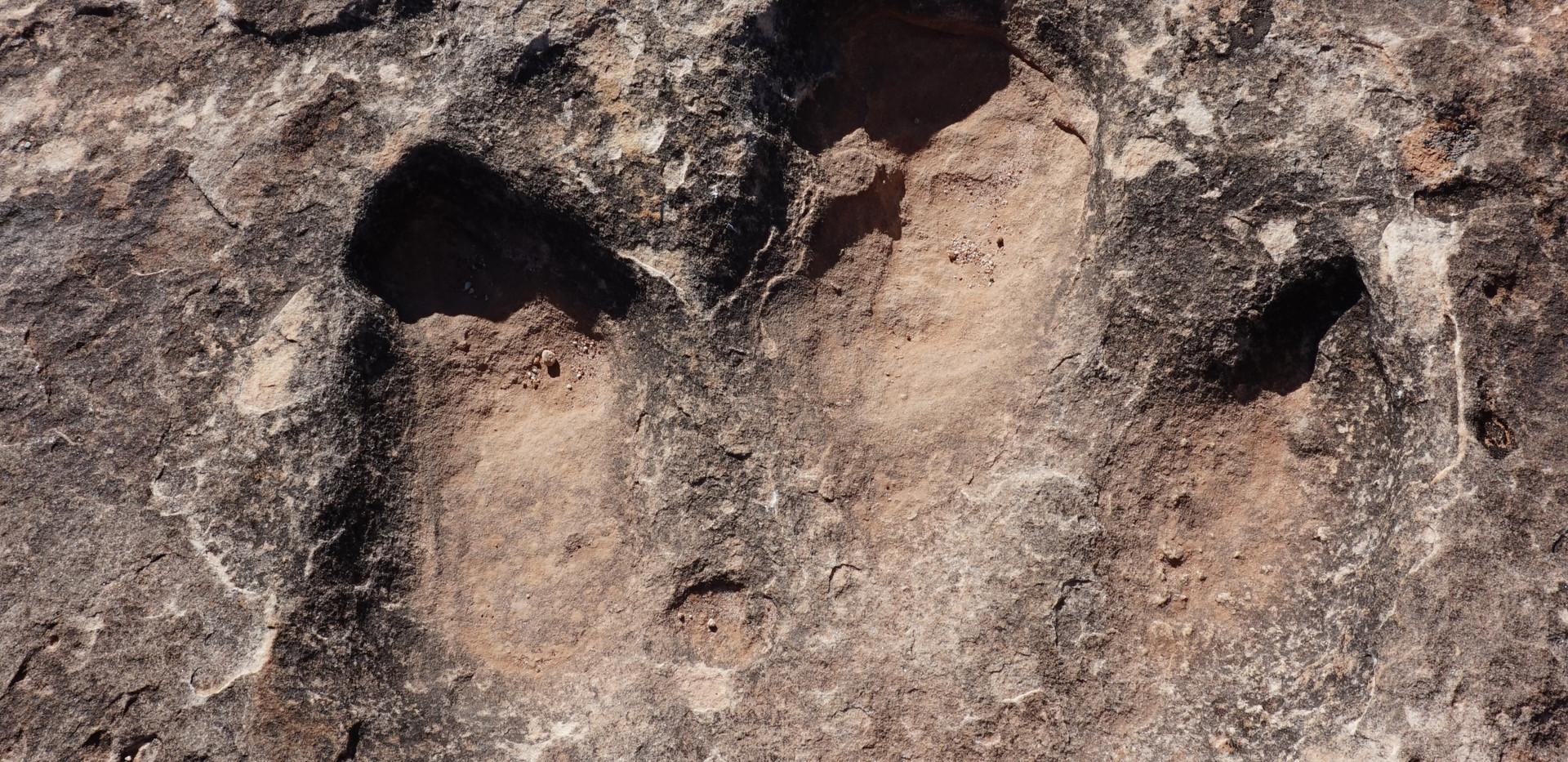 Dinosaur track.JPG