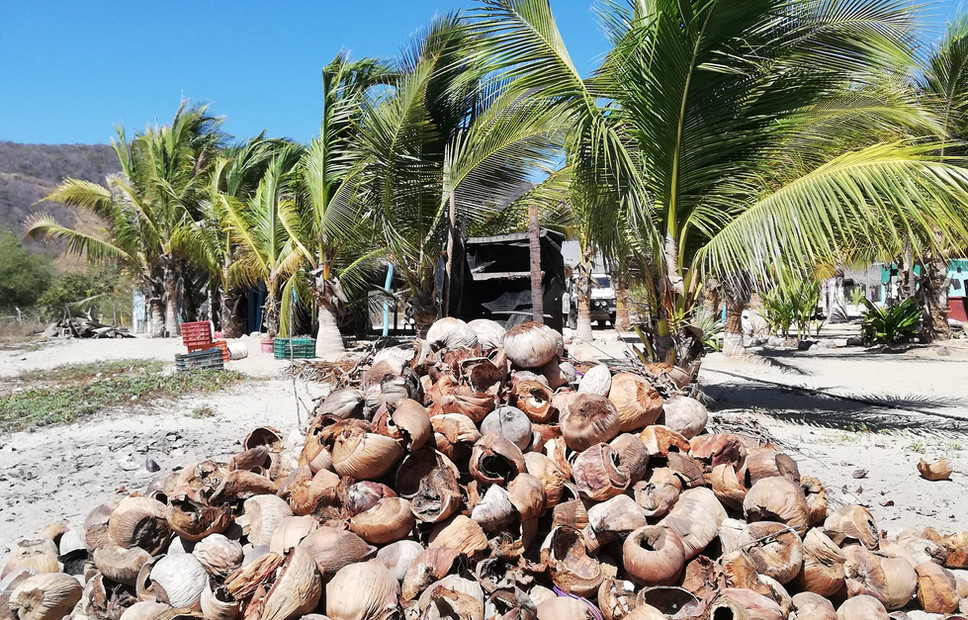 Noix coco Land.jpg