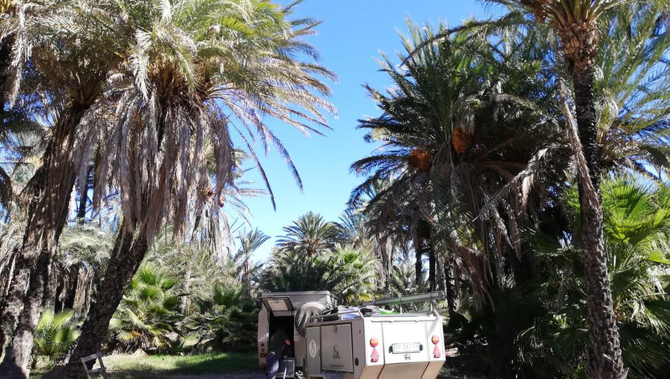 Au milieu des palmiers.jpg