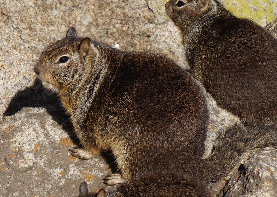 Ecureuils terrestres.JPG