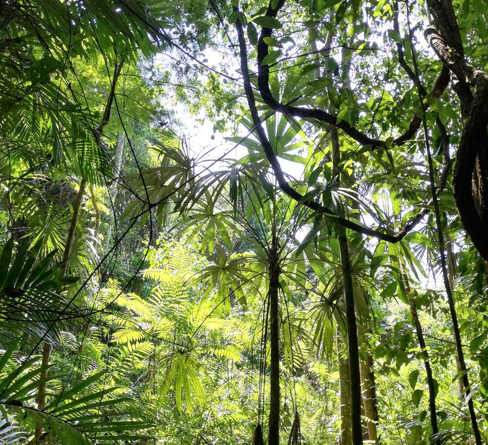 Au coeur de la Selva.jpg