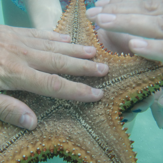 Mořskou hvězdici je nutné udržovat stále pod hladinou