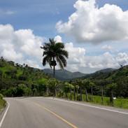 Cesta do hor je lemována palmami
