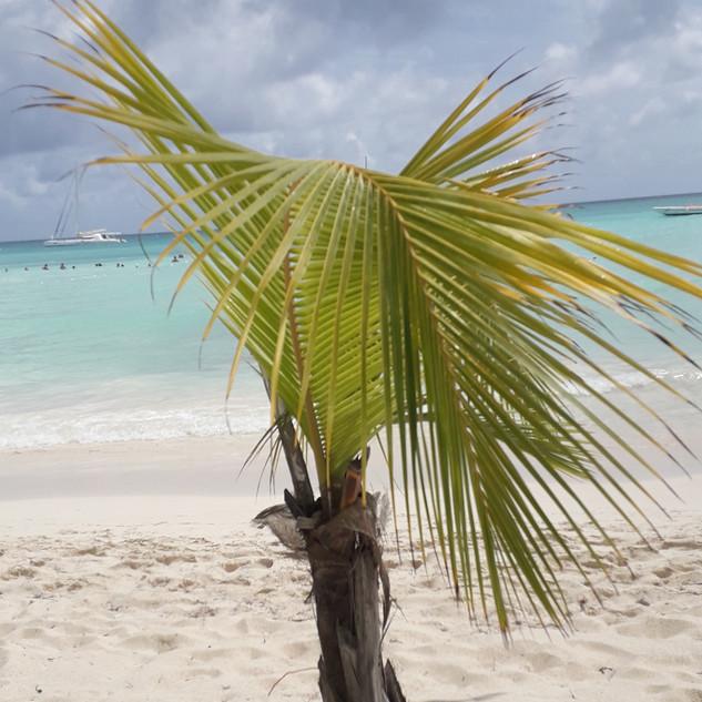 Mini palmička na Saoně