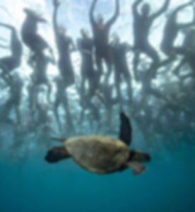 Turtle swimmig underneath Ironman World Championships in Kona, Hawaii. Group of triathletes