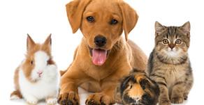 Healing From Pet Loss