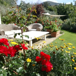 Garden in October!__#garden #rosesarered #gardenphotography #lounging #landscapedgardens #nofilter #