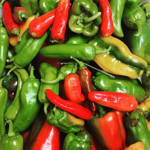 #peppers__#km0 #foodmetres #organic #fieldtofork #nofilter #summercolors #summerflavours #vegpatch #