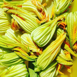 #fioridizucca _#summercolours #zucchini #flowers #vegetablepatch #courgetteflowers #kitchengarden