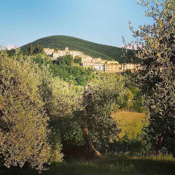Santa Luce through the olive trees