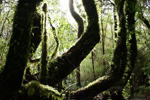 Rain Forest   Patagonia