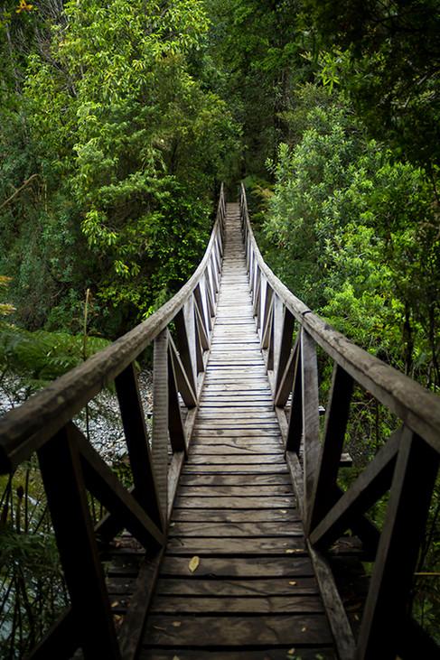 Pumalin National Park   Patagonia