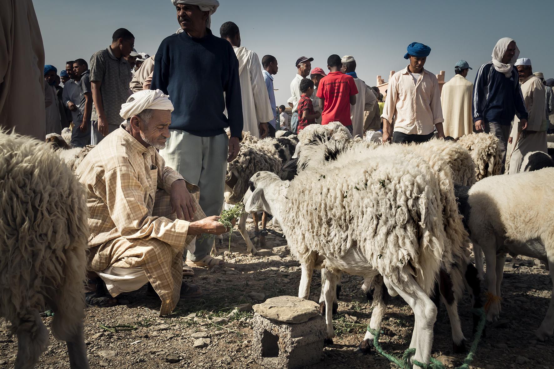 Marroco | Africa | sheep merchant