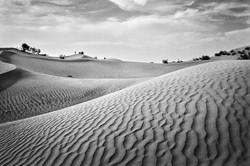 Sahara | Desert Dunes