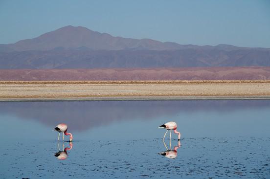 Flamingos Reserve