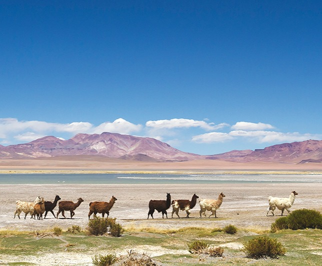 Atacama Desert | Chile