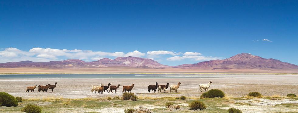 Lagunas Altiplánicas | Atacama Desert