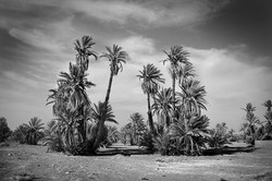Entrance to the Sahara