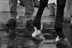Flickr - caballos