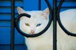 Flickr - gato Asilah
