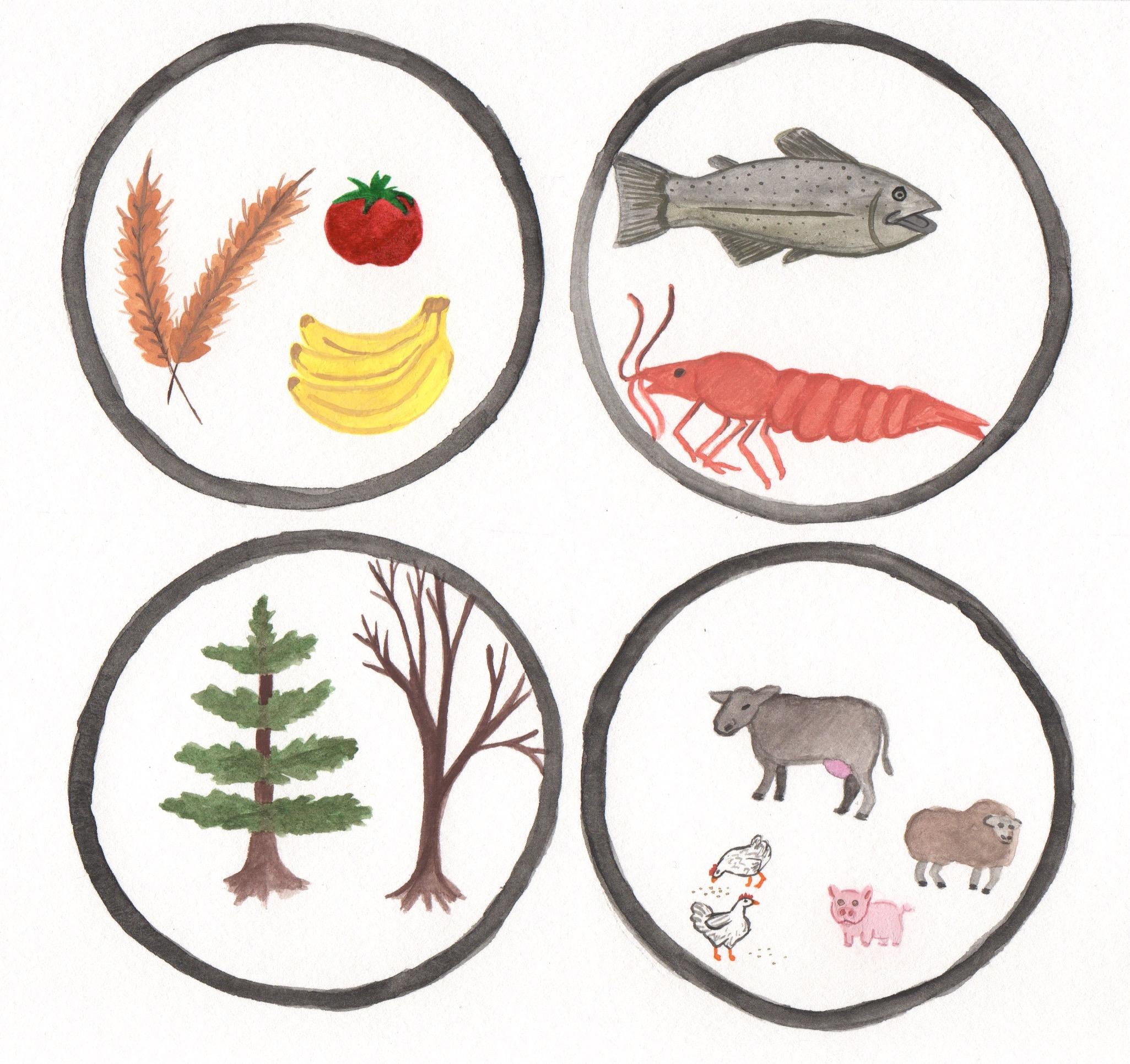 crops fish trees animal circles