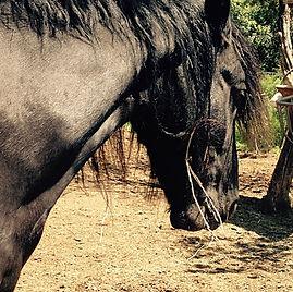 cheval noir pour les bijoux by fleur de Jade