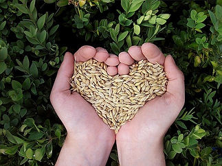 Hands in a heart shape holding organic s