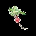 Transparent radish-min.png