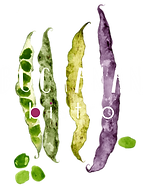 Buchanan Bistro Logo Banchory.png