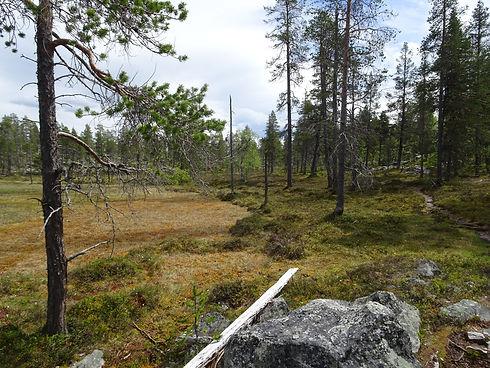 Hochmoor Schweden.JPG